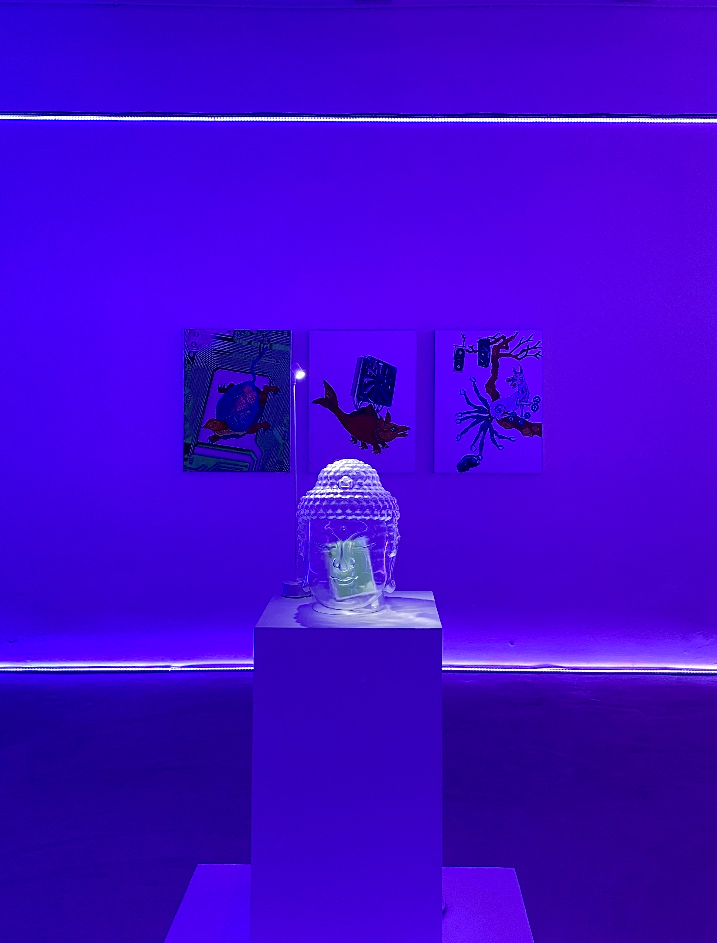 Installation view of Unproven Fallacy is Scientific